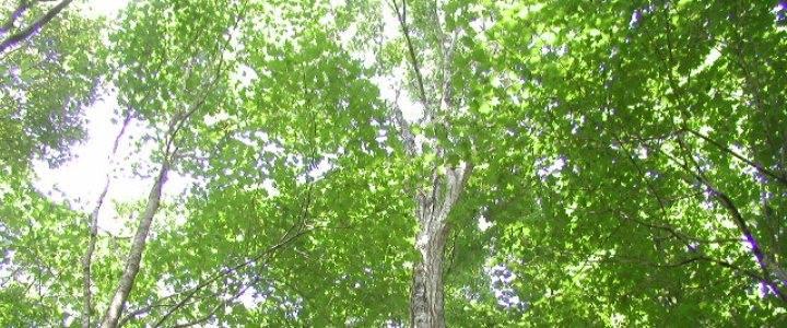 Tree+ing Club Swing-Birdsイメージ画像