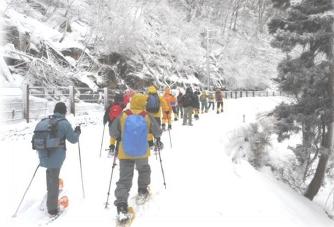 智頭町 冬の森林セラピー スノーシュー トレッキングツアー